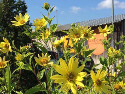 GartenZauner im Herbst Blumen
