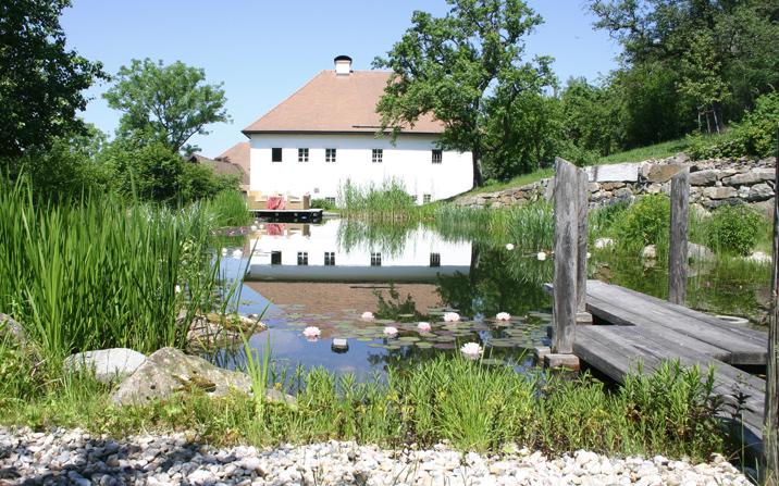 Gartenzauner Teich Wasser