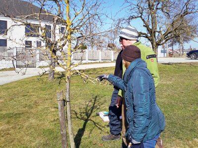 GartenZauner Gartenpflege Pflegetage Pflege Garten Obstbaumschnitt Frühling Vortrag Praxis OÖ Kleinzell Mühlviertel