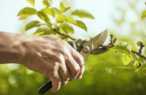 Pflegetage bei Gartenzauner Gartenpflege Pflege Garten Vortrag Schwimmbad Baum Schnitt