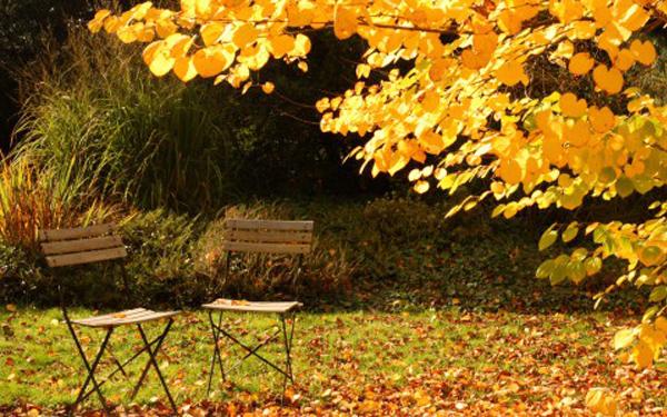Herbst Pflegetipps, GartenZauner