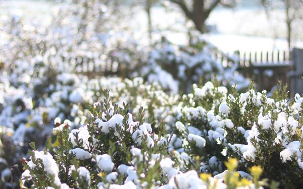 Garten, Pflegetipps im Winter, Winter tipps, Gartenpflege
