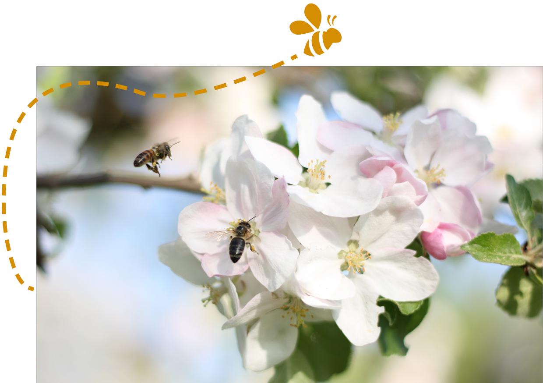 Garten kologie gartenzauner ber kologie und bienen im for Bienenfreundlicher garten