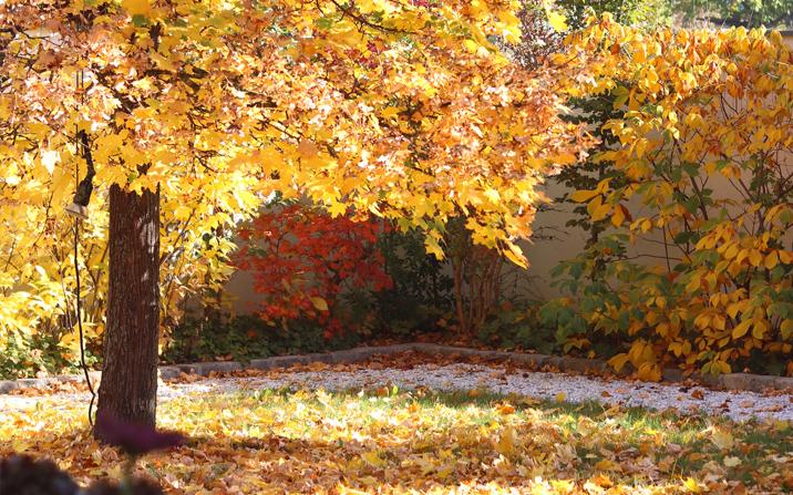 Gartenzauner, Herbst, pflegetipps im Herbst