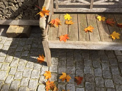 Herbst Pflegetipps, GartenZauner, Gartengestaltung oö