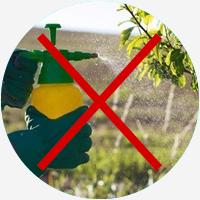 Bienen, Bienen Garten, Gartengestaltung, Bienenfreundlicher garten, Ökologie im Garten, Garten und Landschaftsbau