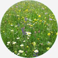 Bienen, Bienen Garten, Gartengestaltung, Bienenfreundlicher garten, Ökologie im Garten, Garten und Landschaftsbau, gartenzauner