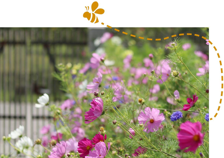Gartenzauner, Bienen, Bienen Garten, Gartengestaltung, Bienenfreundlicher garten, Ökologie im Garten, Garten und Landschaftsbau