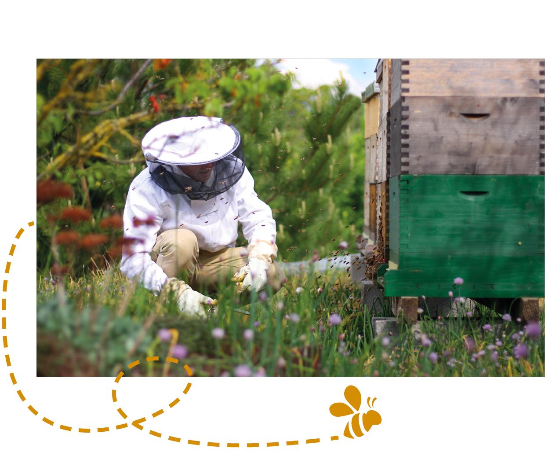 GartenZauner, Imkerei, Honigbienen, Ökologie im Garten, bienenfreundlicher Garten