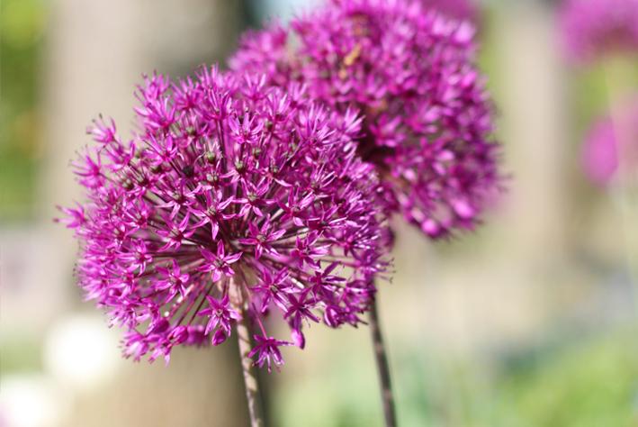 Pflegetipps für Ihren Garten im Frühling, Gartenpflege, gartenzauner