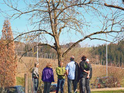 Baumschnitt, Pflegetage, Garten Zauner, Gartenzauner, oö, Gartengestaltung, Oberösterreich