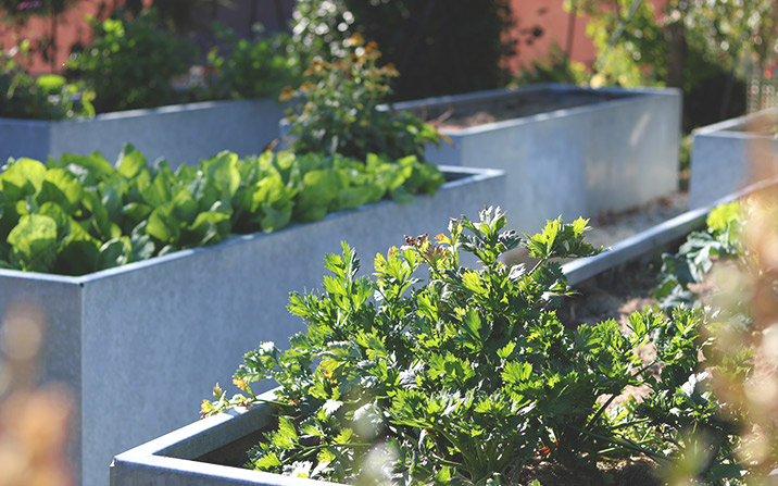 Ernte im Garten - Gemüsegarten