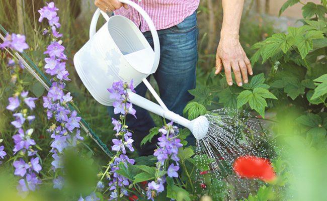 Richtig gießen: 7 Tipps zur Bewässerung im Garten