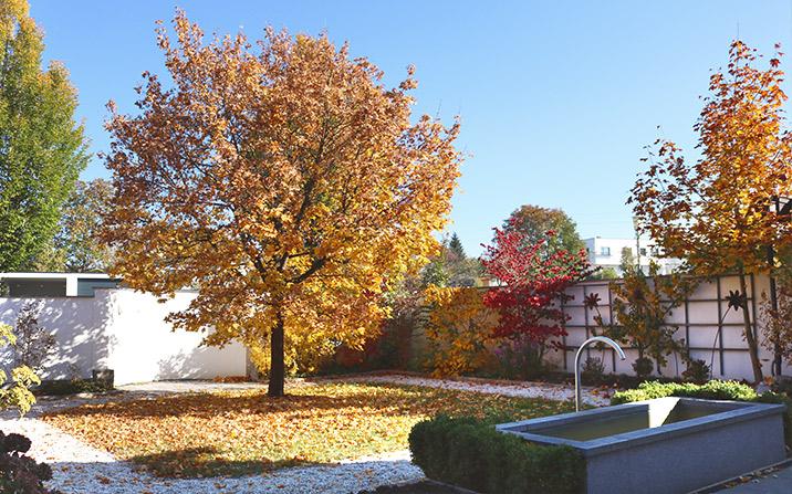 Herbstsonne - Herbstfreuden im Garten