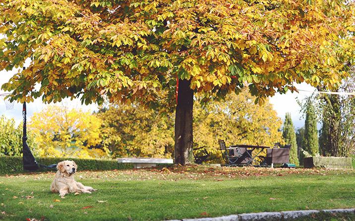 Garten im Herbst - GartenZauner