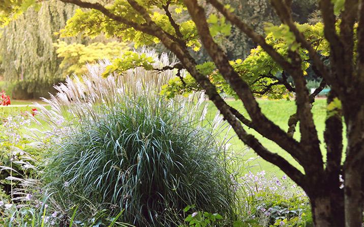 Gräser und Bäume - GartenZauner