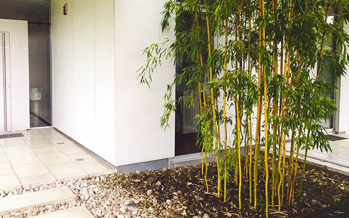 Bambus - Gartengestaltung Gartenzauner