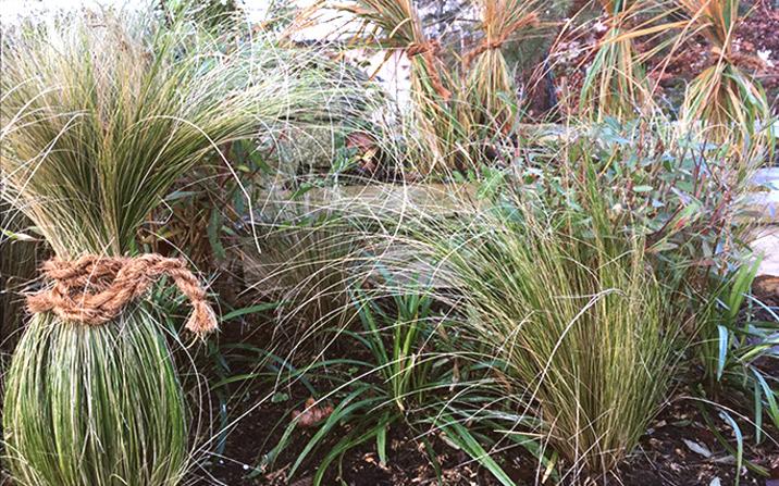 Gräser zusammenbinden - Gartenarbeiten im Spätherbst