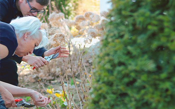 Gärtnern GartenZauner