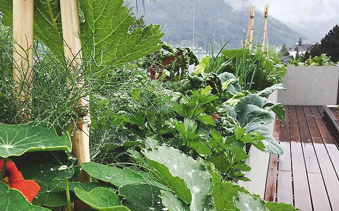 Ernten im Garten