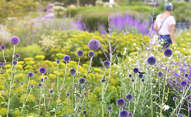 GartenZauner, Pflanzen für Hitze und pralle Sonne